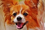 """How to Avoid  """"Small Dog Syndrome"""""""
